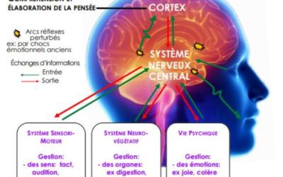 Fatigue, vertiges, timidité, allergies… et si cela venait du cerveau