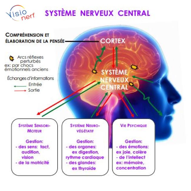 Pathologies du Cerveau