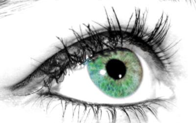 Oeil – Yeux – Anatomie et Fonctionnement